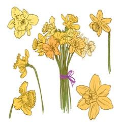 Narcissus bouquet vector