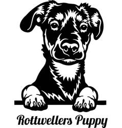 rottweiler peeking dog - head isolated on white vector image