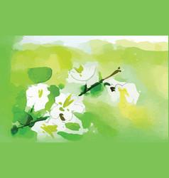 watercolor jasmine flower vector image vector image