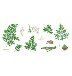 Collection of elegant detailed botanical drawings vector