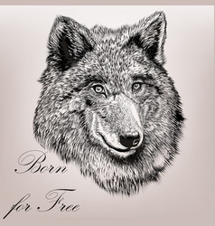 High detailed hand draw wolf realistic style vector