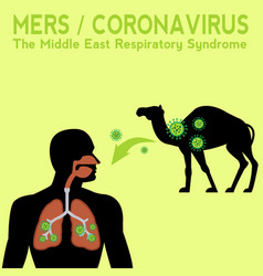 Mers coronavirus desease transfer diagram vector