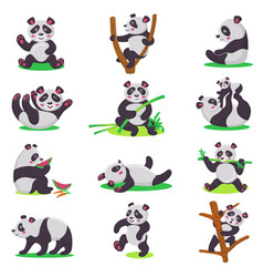 panda kid bearcat character or chinese bear vector image