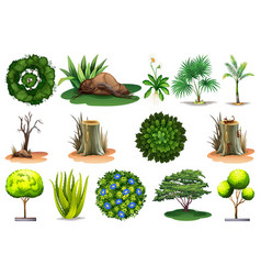 set different plants vector image