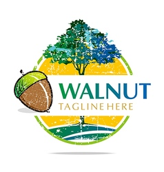 Walnut trees hazelnut freshness delicious vector