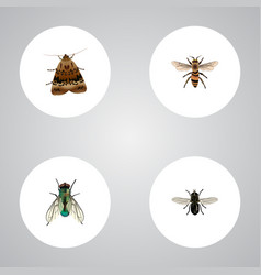 Realistic wasp butterfly midge and other vector