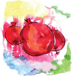 watercolor pomegranates of red color vector image