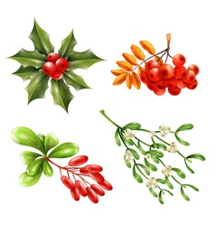 Christmas Berry Branches Set vector image