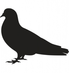 dove vector image