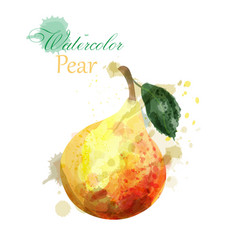 pear watercolor isolated juicy colorful vector image