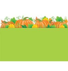 Pumpkins banner vector