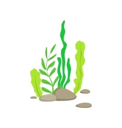 Set Of Different Bottom Underwater Algae Growing vector
