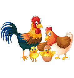 Isolated chicken family on white background vector