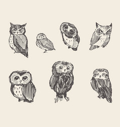 set drawn owls vintage style vector image