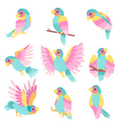 collection of tropical parrots in different poses vector image