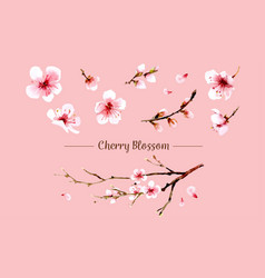 sakura flower set sakura flower vector image