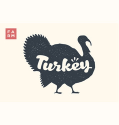 turkey lettering typography vector image