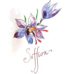 saffron flower of blue color vector image