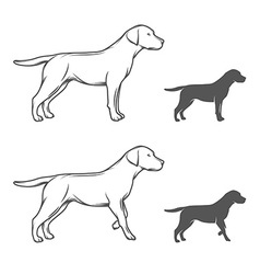 A dog in different poses vector