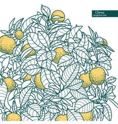 Drawing of a small citrus tangerine tree vector