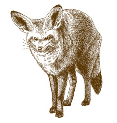 Engraving drawing of bat-eared fox vector