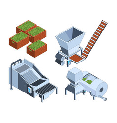 olive production oil plants extraction technology vector image