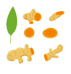 set turmeric root and leaves isolated on white vector image