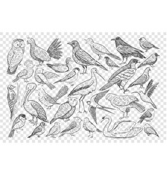 various birds on nature doodle set vector image