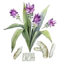 Watercolor curcuma set vector image