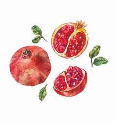 Set of watercolor pomegranates a whole fruit and vector