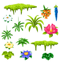 set tropical flowers exotic tropical plants vector image