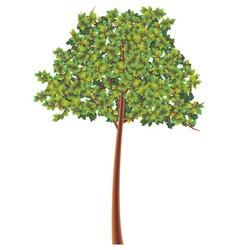 tree illustration vector image