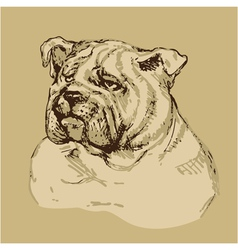 Bulldog head - hand drawn -sketch in vintage style vector image