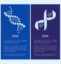 dna set of white spirals isolated on blue backdrop vector image