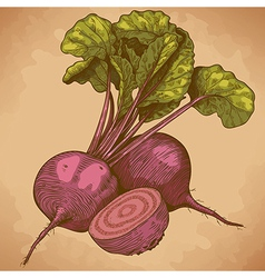 engraving beet retro vector image