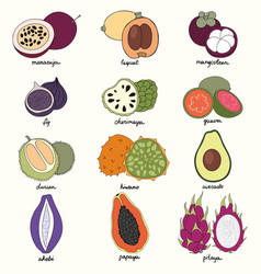 exotic fruits set of vector image
