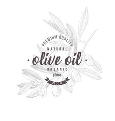 olive oil label design over hand drawn olive vector image