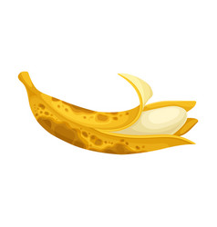 Rotten banana with stinky rot covered skin vector