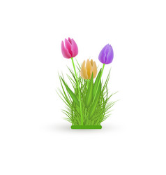 spring floral tulip bundle with fresh colorful vector image