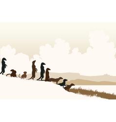 Meerkat lookouts vector image vector image