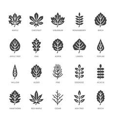 Autumn leaves flat glyph icons leaf types rowan vector