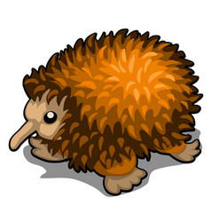Cartoon echidna isolated on white background vector