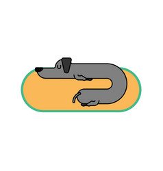dachshund sleeps linear style dog is long funny vector image