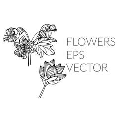 flower hand drawn set vector image
