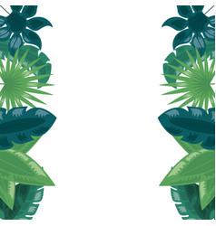 foliage leaves greenery botanical border vector image
