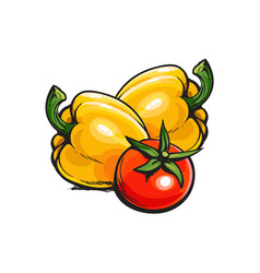 Whole ripe red tomato and two yellow bell peppers vector