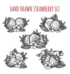 strawberry sketch icons set vector image