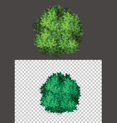 bushes natural wild image vector image