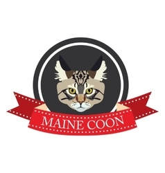Flat icon pedigreed cat maine coon vector