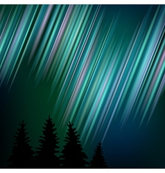 nothern shine spruce sky vector image